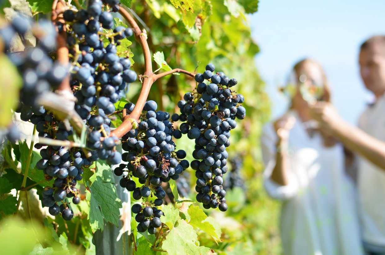 Ronda ruta del vino